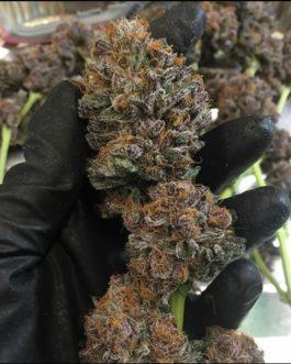 Buy Purple Kush Strain