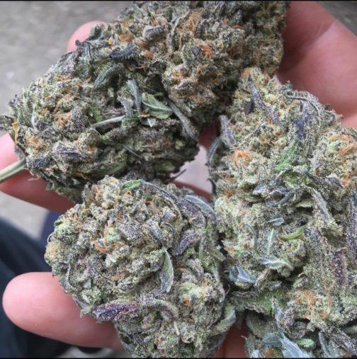 Buy purple cookies strain